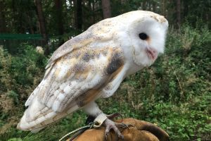 September Newsflash – Falconry! Book-birthday! Shortlisting! Events!